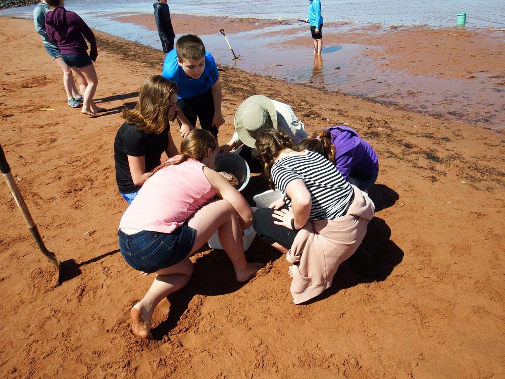 Beach-Dune Ecosystem Module